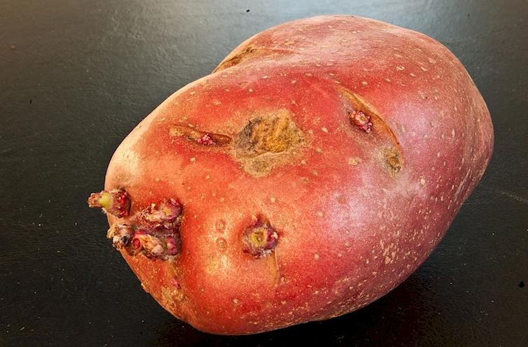 3. Potato