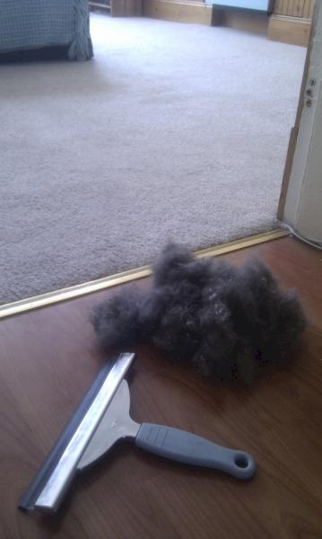 limpieza-hogar-alfombras-moqueta